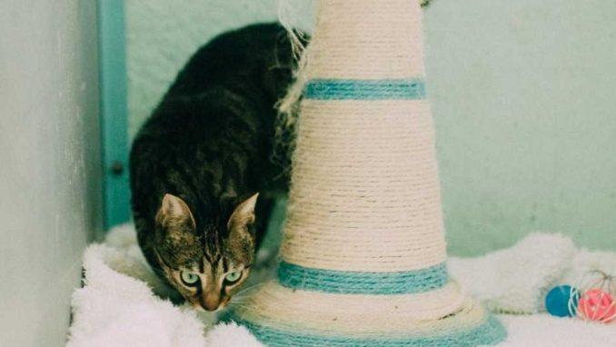 מג'יק - חתולה לאימוץ - אגודת צער בעלי חיים בישראל