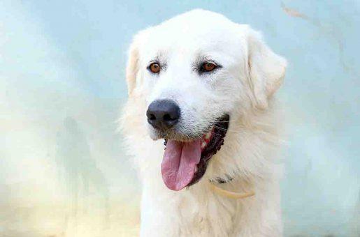 מילקי כלב לאימוץ אגודת צער בעלי חיים בישראל