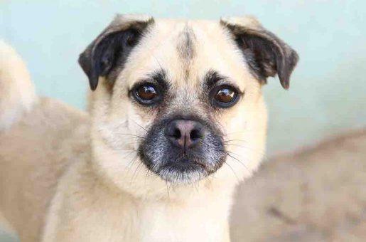 אלזה כלבה לאימוץ אגודת צער בעלי חיים בישראל