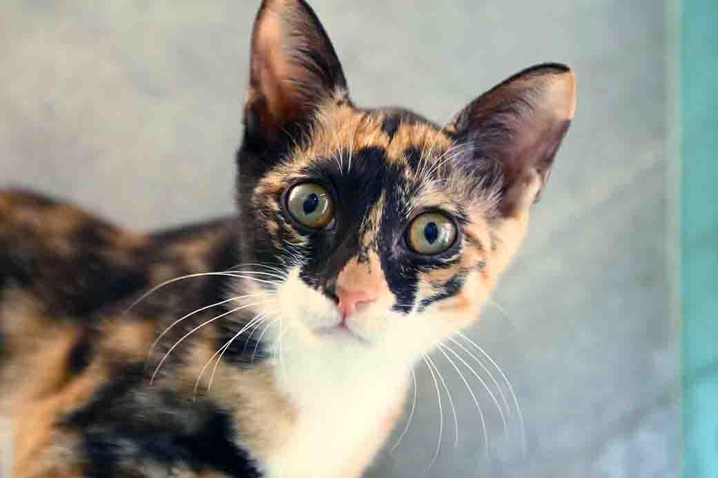 ששת חתולה לאימוץ אגודת צער בעלי חיים בישראל