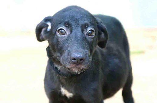 קולה כלב לאימוץ אגודת צער בעלי חיים בישראל
