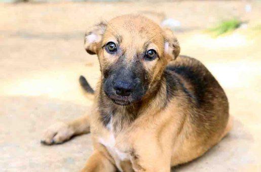 דונה כלבה לאימוץ אגודת צער בעלי חיים בישראל