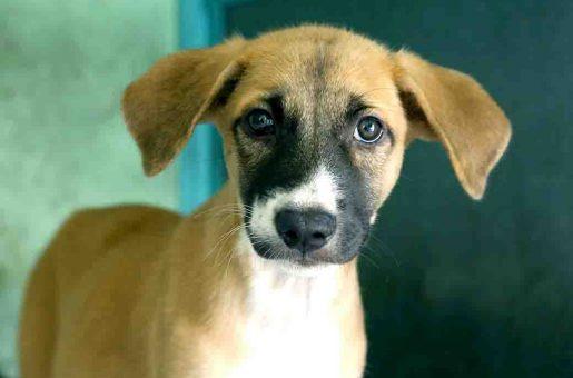 טום כלב לאימוץ אגודת צער בעלי חיים בישראל