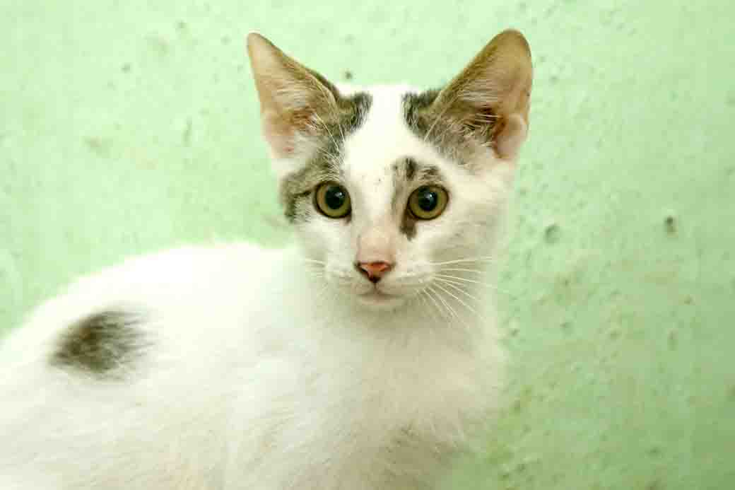 סוני חתול לאימוץ אגודת צער בעלי חיים בישראל