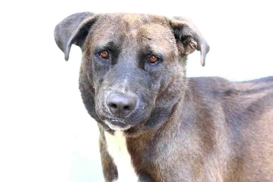בוב כלב לאימוץ אגודת צער בעלי חיים בישראל