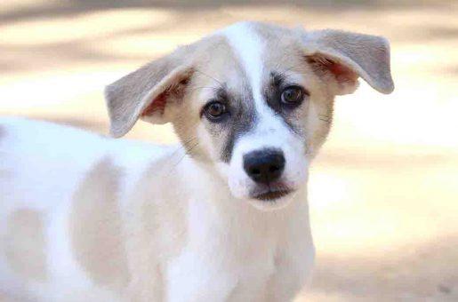 סופי כלבה לאימוץ אגודת צער בעלי חיים בישראל