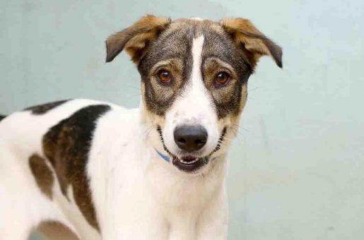 כתם כלבה לאימוץ אגודת צער בעלי חיים בישראל