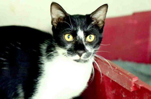 ויני חתול לאימוץ אגודת צער בעלי חיים בישראל
