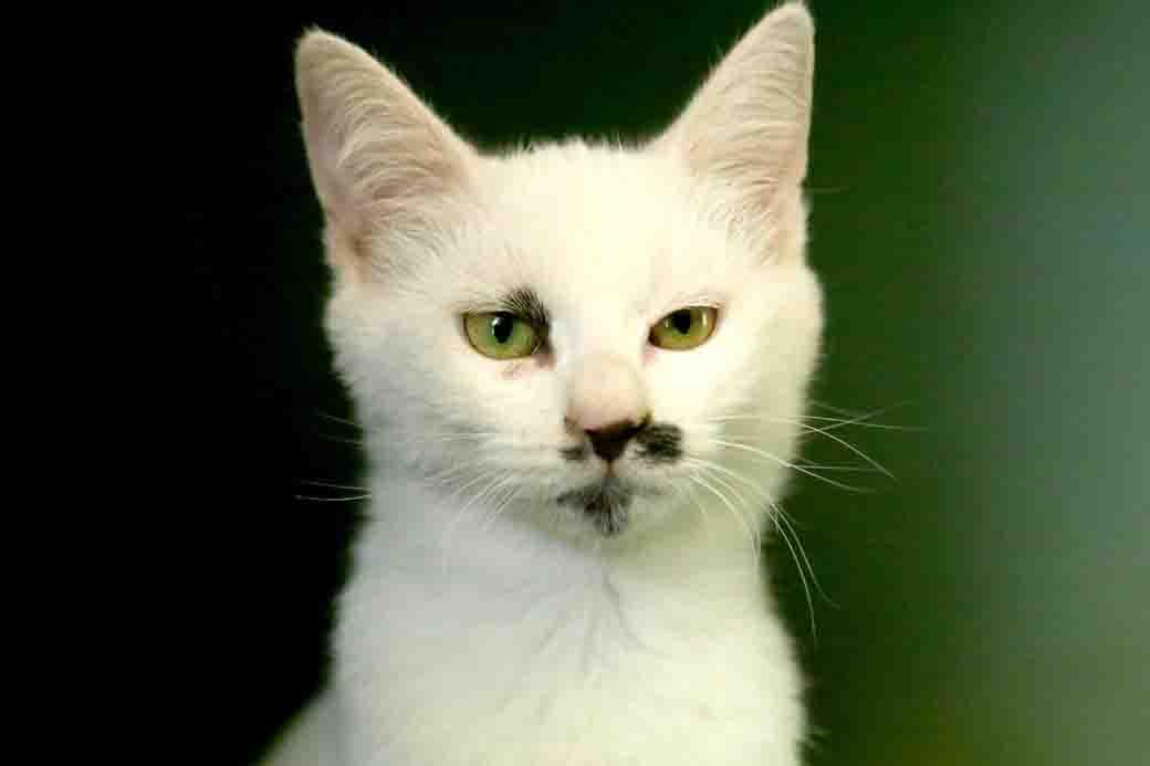 מדונה חתולה לאימוץ אגודת צער בעלי חיים בישראל