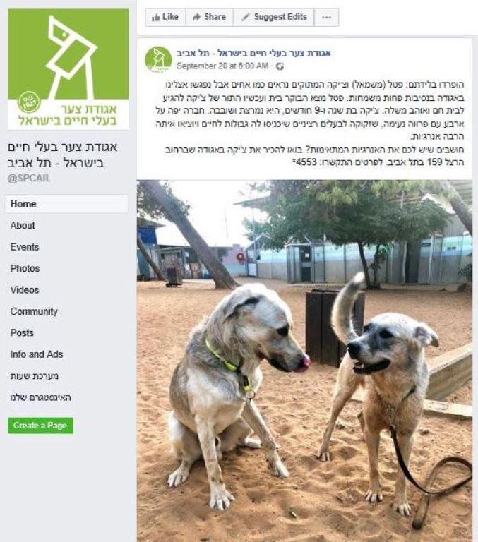 פוסט פייסבוק - אגודת צער בעלי חיים בישראל