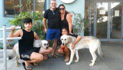 אימוץ כפול - אגודת צער בעלי חיים בישראל
