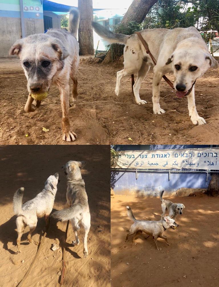 צ'יקה ופטל - אגודת צער בעלי חיים בישראל