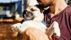 אימוץ כלבים - אגודת צער בעלי חיים בישראל