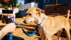 אילוף כלבים - אגודת צער בעלי חיים בישראלאילוף כלבים - אגודת צער בעלי חיים בישראל