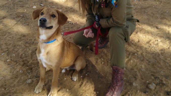 מייקי - כלב לאימוץ - אגודת צער בעלי חיים בישראל