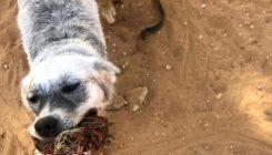 התנהגויות מוזרות של כלבים - אגודת צער בעלי חיים בישראל