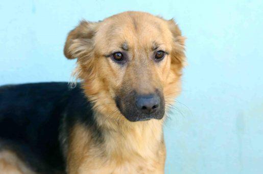 איזמרלדה כלבה לאימוץ אגודת צער בעלי חיים בישראל