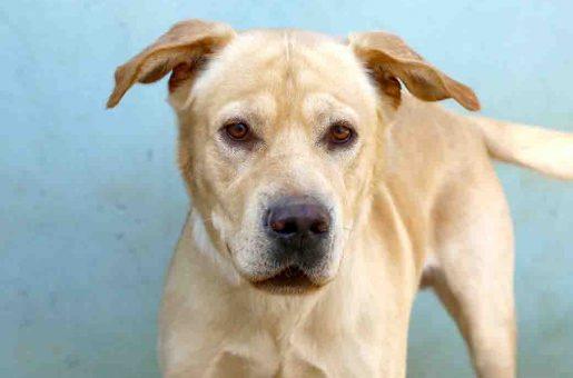 ניל כלב לאימוץ אגודת צער בעלי חיים בישראל