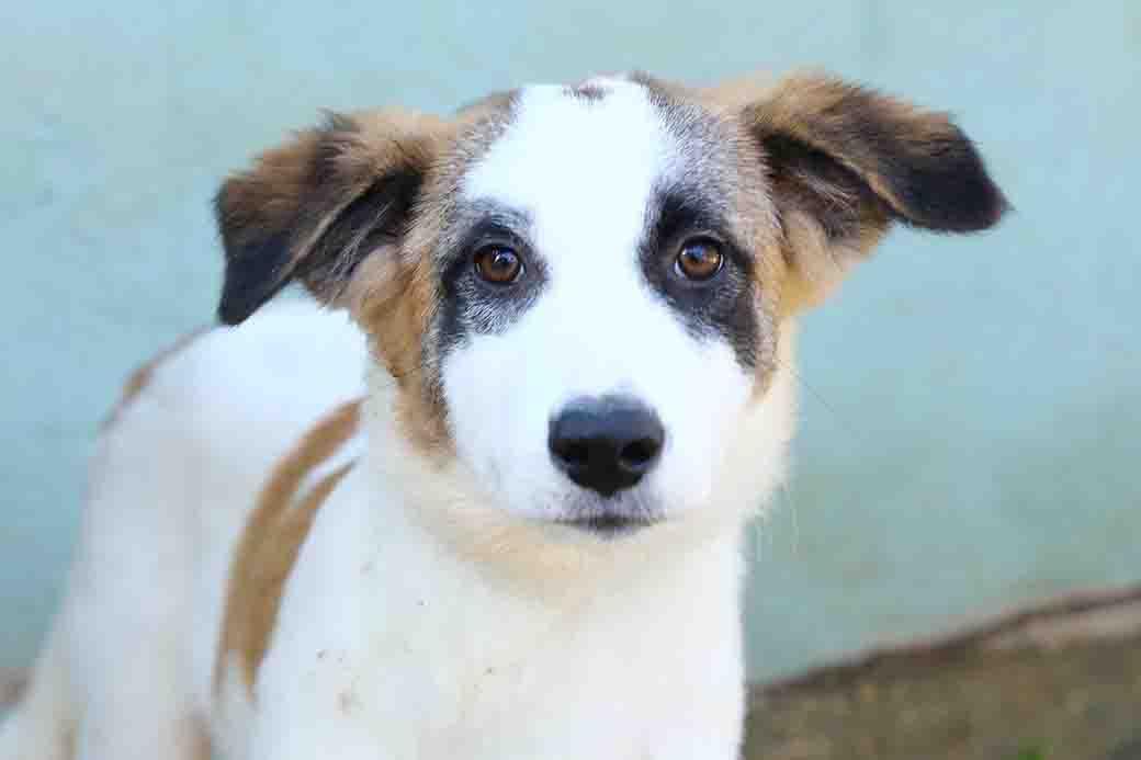 נונה כלבה לאימוץ אגודת צער בעלי חיים בישראל