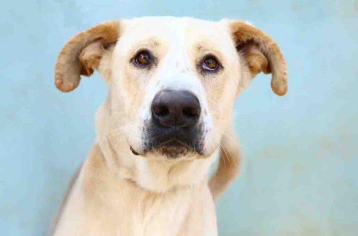 בוני כלב לאימוץ אגודת צער בעלי חיים בישראל