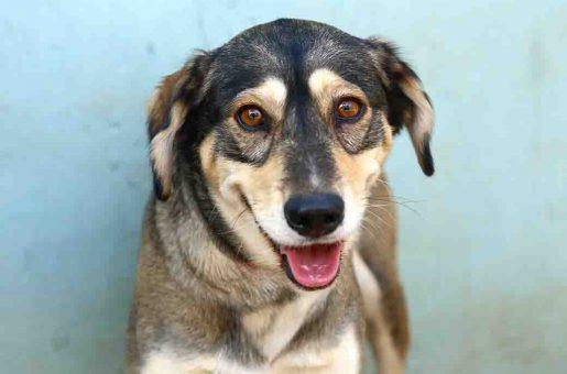 מוקה כלבה לאימוץ אגודת צער בעלי חיים בישראל