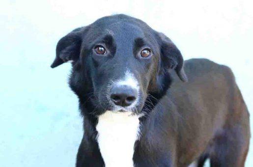 לילך כלבה לאימוץ אגודת צער בעלי חיים בישראל