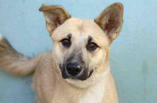 גורי כלב לאימוץ אגודת צער בעלי חיים בישראל