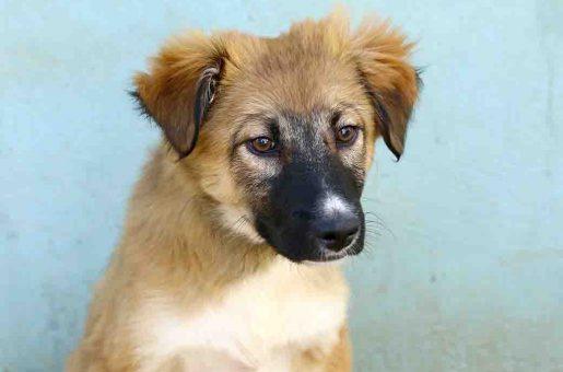 לונה כלבה לאימוץ אגודת צער בעלי חיים בישראל
