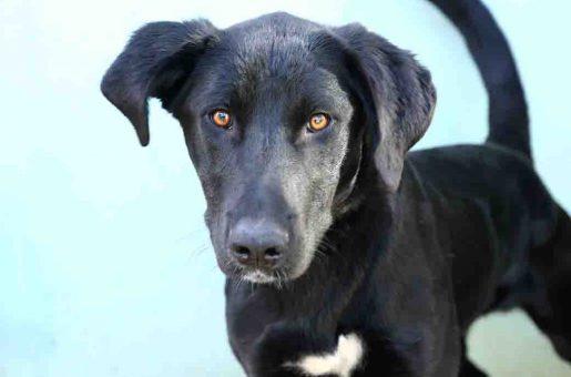 רפי כלב לאימוץ אגודת צער בעלי חיים בישראל