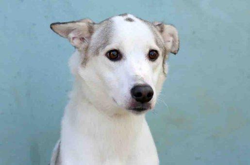 מילקה כלבה לאימוץ אגודת צער בעלי חיים בישראל