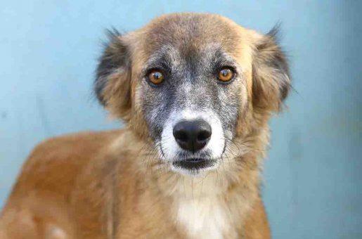 בובה כלבה לאימוץ אגודת צער בעלי חיים בישראל