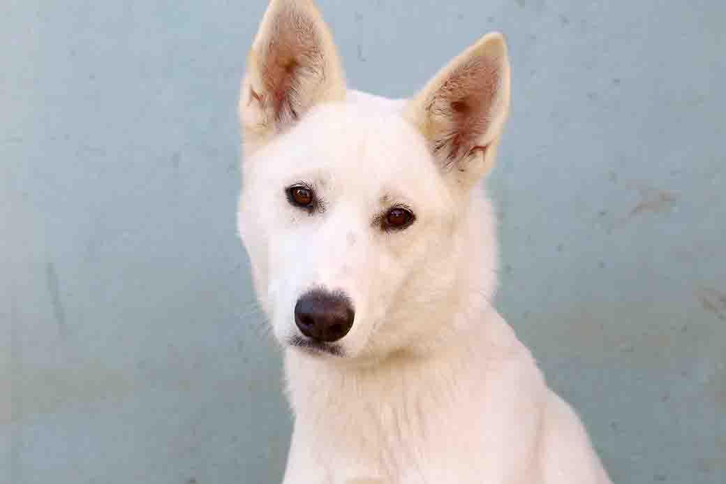 עיזה כלבה לאימוץ אגודת צער בעלי חיים בישראל