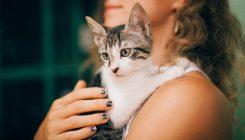 אימוץ חתולים - אגודת צער בעלי חיים בישראל