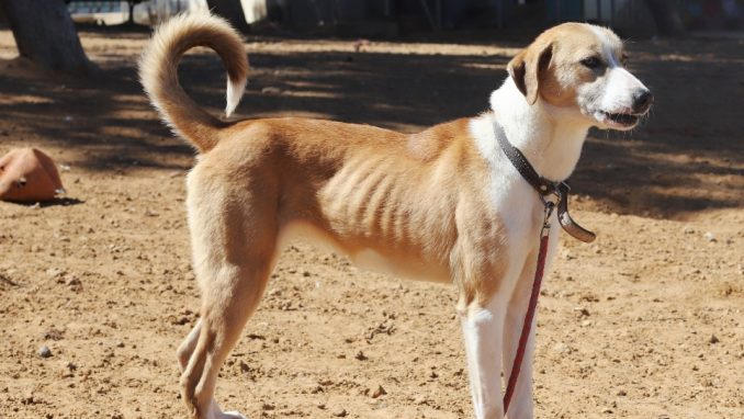 נירה - כלבה לאימוץ - אגודת צער בעלי חיים בישראל