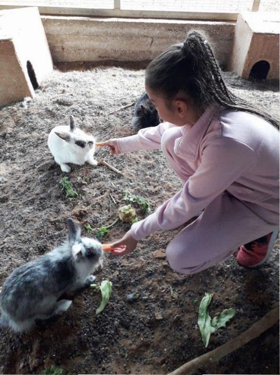 פינת החי - אגודת צער בעלי חיים בישראל