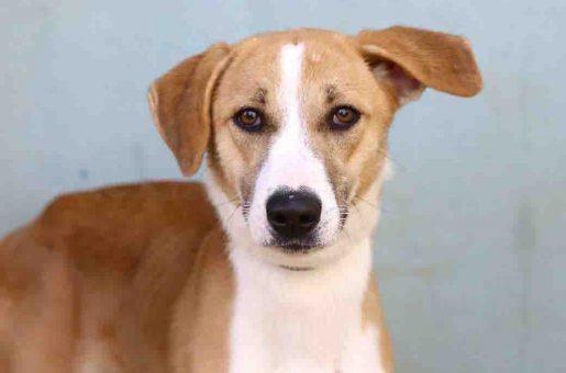 נירה כלבה לאימוץ אגודת צער בעלי חיים בישראל