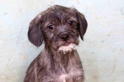 אירמה כלבה לאימוץ אגודת צער בעלי חיים בישראל