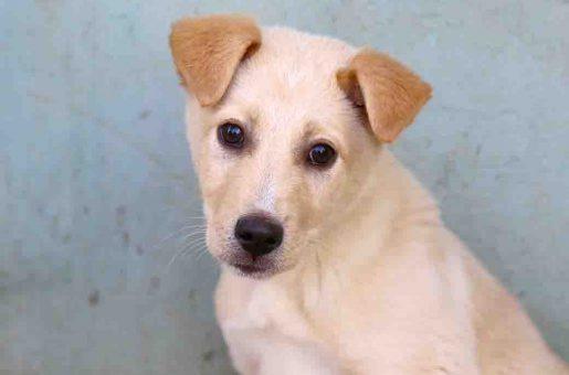רודי כלב לאימוץ אגודת צער בעלי חיים בישראל