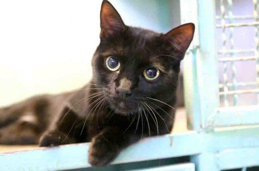 יצחק חתול לאימוץ אגודת צער בעלי חיים בישראל
