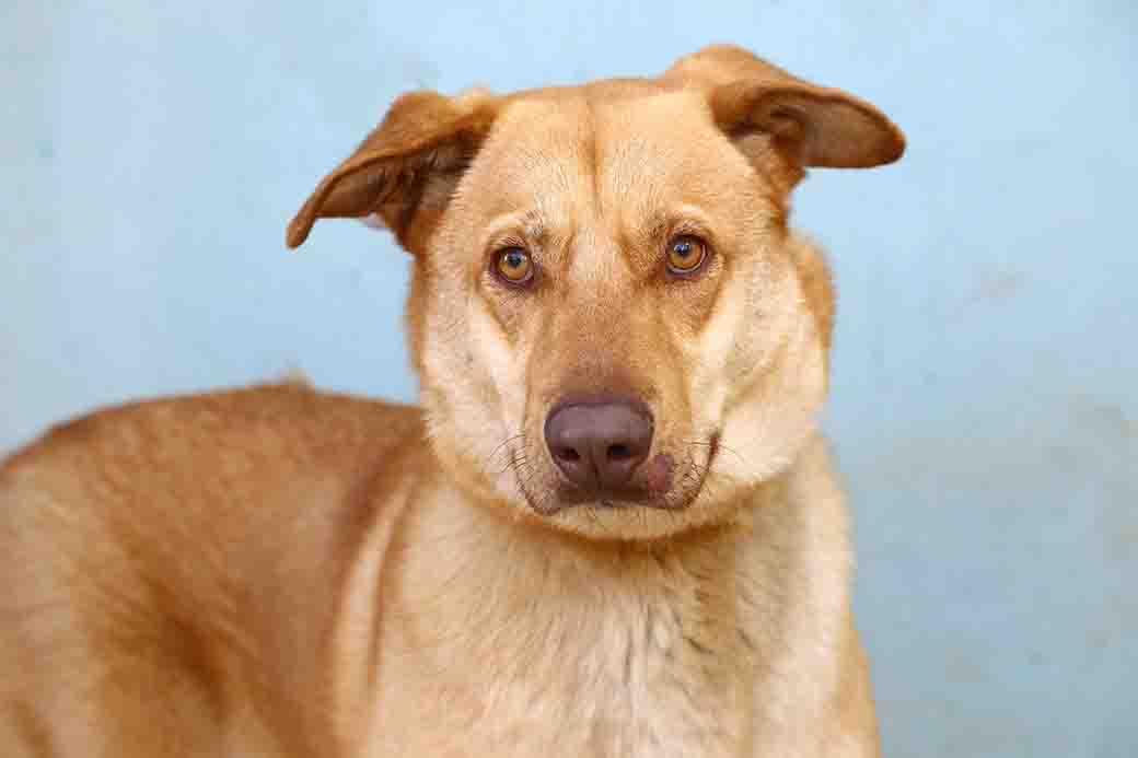 שון כלב לאימוץ אגודת צער בעלי חיים בישראל
