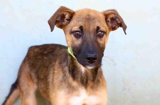 אושר כלב לאימוץ אגודת צער בעלי חיים בישראל