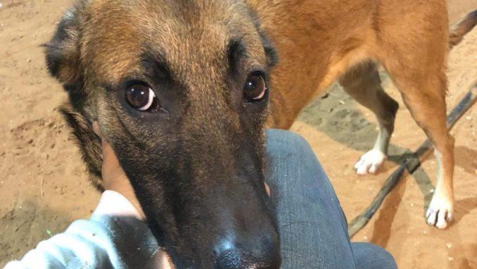 איב - כלבה לאימוץ - אגודת צער בעלי חיים בישראל