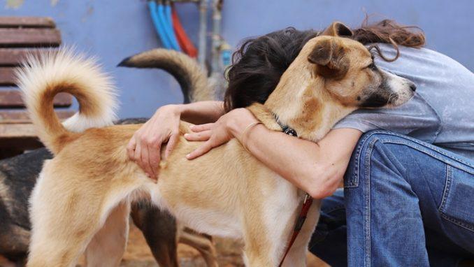 אנג׳ל – כלבה לאימוץ – אגודה צער בעלי חיים ישראל