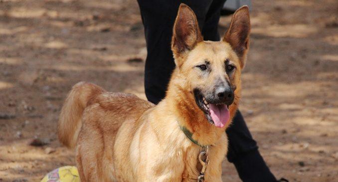 לונה – כלבה לאימוץ – אגודה צער בעלי חיים ישראל