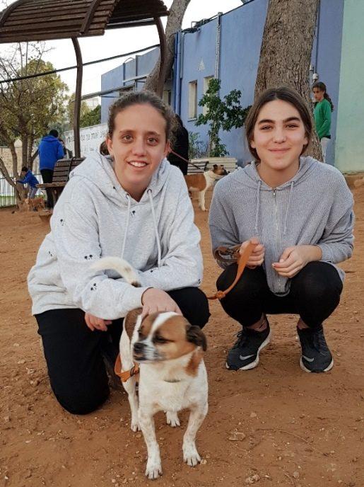מטיילים בחצר האגודה עם הכלבים שמועמדים לאימוץ
