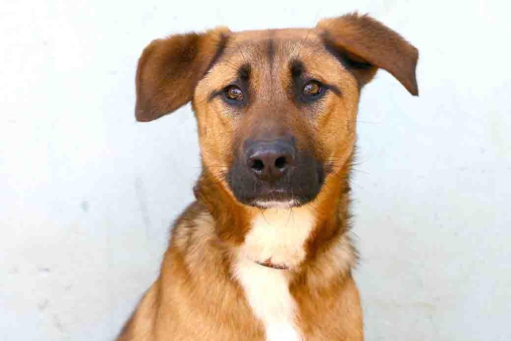 מקס כלב לאימוץ אגודת צער בעלי חיים בישראל
