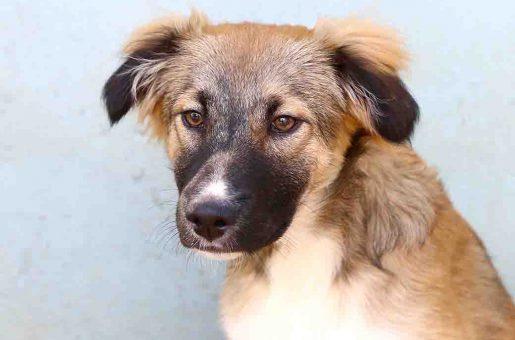 מוקה כלב לאימוץ אגודת צער בעלי חיים בישראל