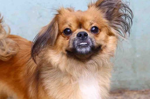 שבתאי כלב לאימוץ אגודת צער בעלי חיים בישראל