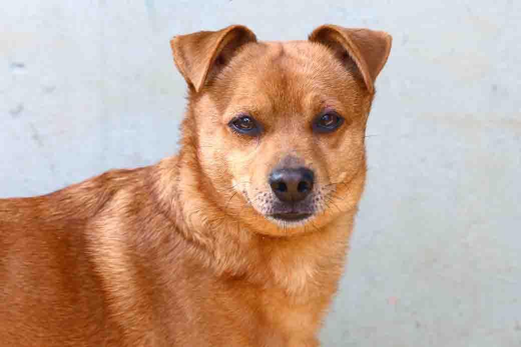 קיזי כלב לאימוץ אגודת צער בעלי חיים בישראל