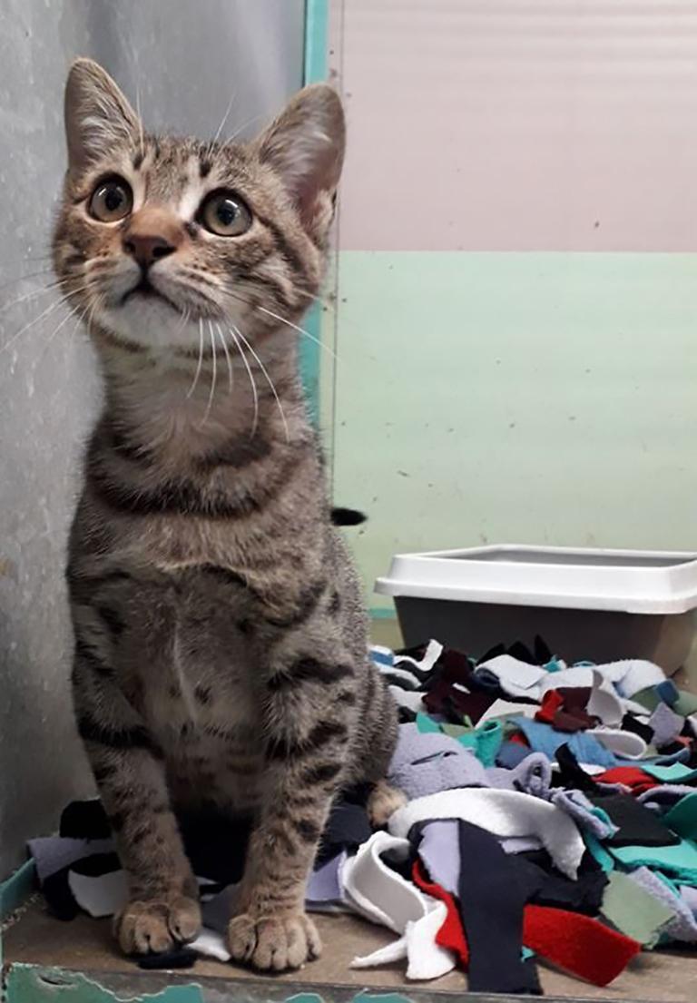 החתול זורו והמחצלת החדשה שלו